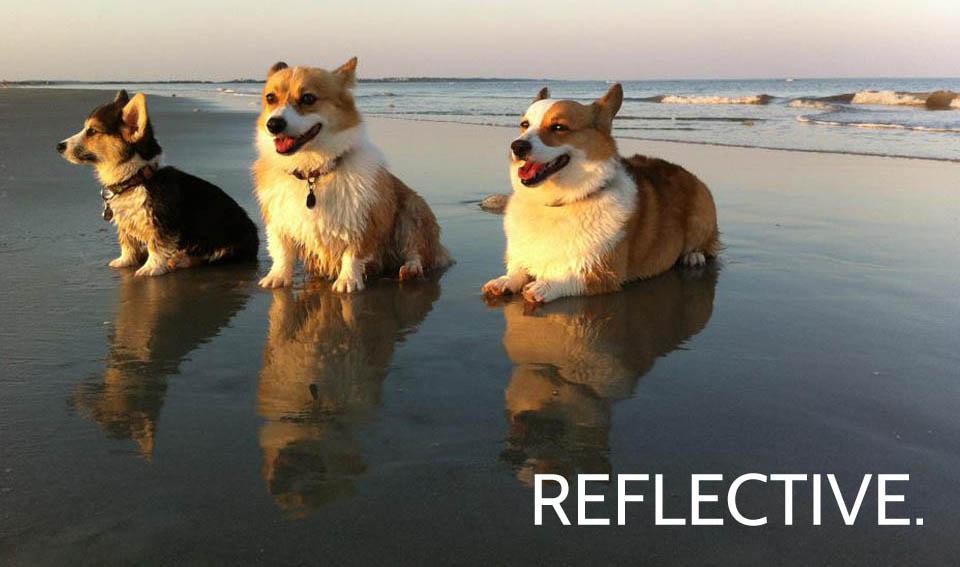 CORGIS_REFLECTIVE